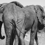 elephant-1169253