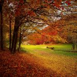 autumn-1072827_1920-2