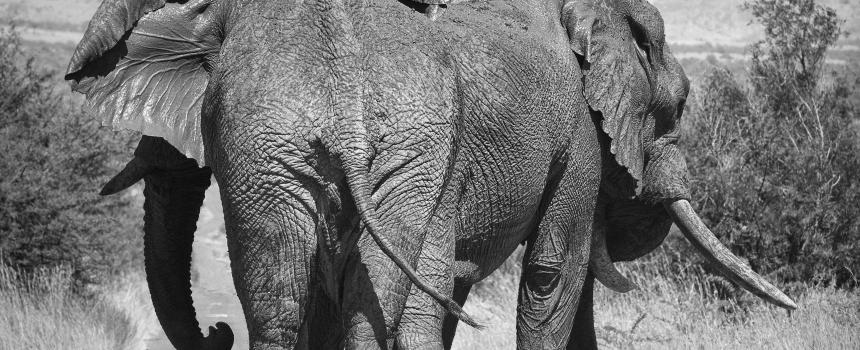 The Spark Loves: Elephant Edition